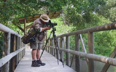 Santa Marta, el mejor lugar para el avistamiento de aves en el mundo